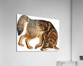 Fox Print | British Wildlife Art | A3 A4 A5 | Fox Lover Gift | Fox Illustration | Fox Painting | Fox Nursery Wall Art | British Animal Print  Acrylic Print