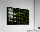 Reflecting Lily  Acrylic Print