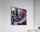 Spaghettification  Acrylic Print