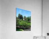 Fields of Green  Acrylic Print