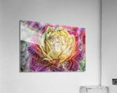 Beezy Blossom  Acrylic Print