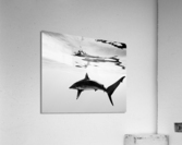 B&W Silky   Acrylic Print
