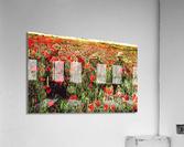 Hidden in the Poppy Fields  Acrylic Print