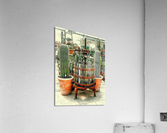 Old Wine Press Used in Succulent Display  Acrylic Print