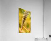 Flamboyantes Graminees no. 6 - Flamboyant Grasses no. 6  Impression acrylique