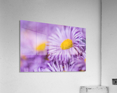 Beautiful summer background  Acrylic Print