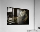 Iguana profile  Acrylic Print