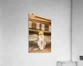 IMG_1320  Acrylic Print