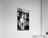 IMG_1324  Acrylic Print
