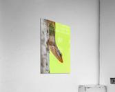 IMG_1264  Acrylic Print