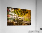 IMG_1288  Acrylic Print