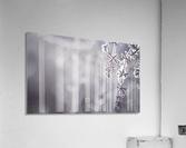 --  Acrylic Print