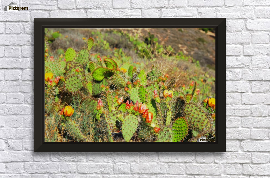 green cactus with red and yellow flower texture background - TimmyLA ...