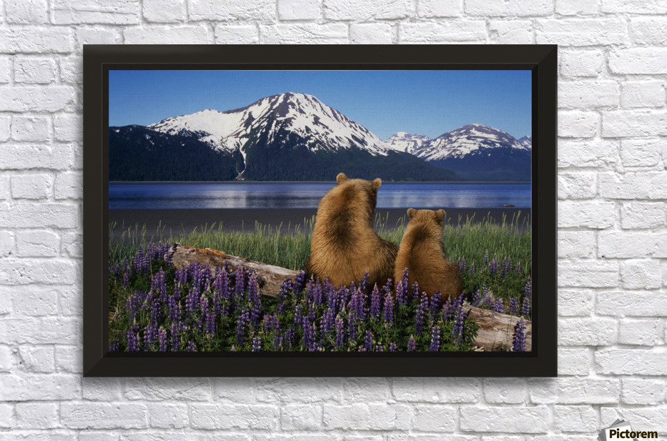 Grizzly sow cub sit on log view turnagain arm southcentral alaska digital composite wall