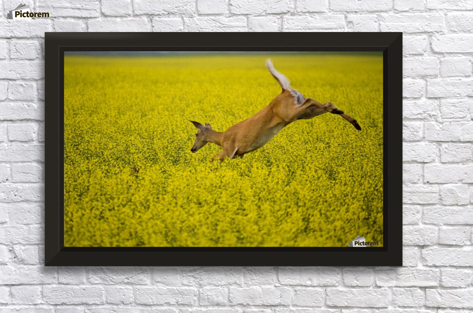 Deer Jump - Mark Duffy Canvas