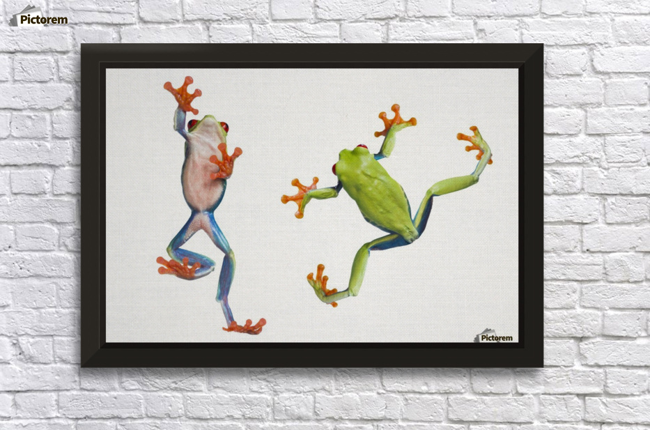 Completely new Two Red Eyed Tree Frogs - PacificStock Canvas HL43