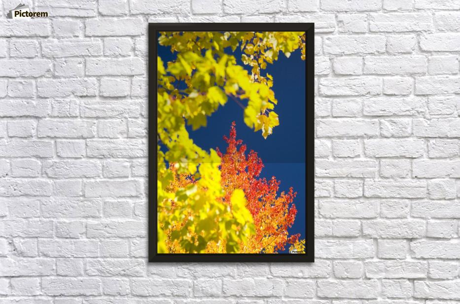 Autumn Trees - PacificStock Canvas