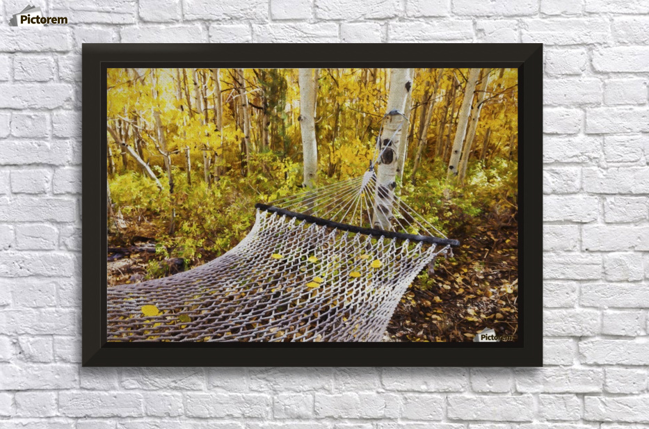 Classic hammock invites visitors to relax among aspen trees in ...