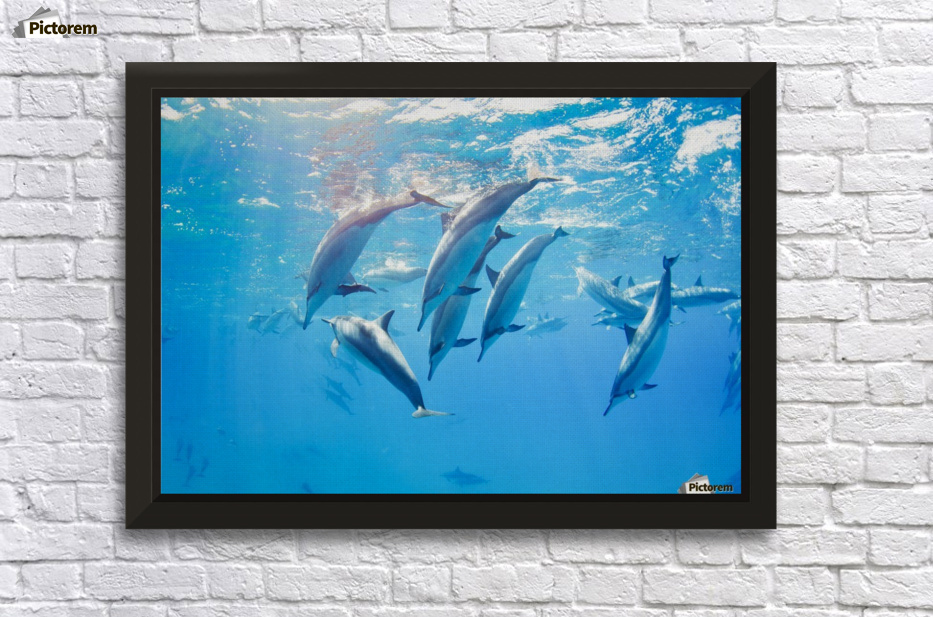 dolphins swimming underwater, tropical ocean - PacificStock Canvas