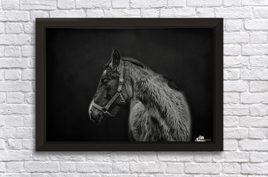 Amish Workhorse Stretched Frame Print