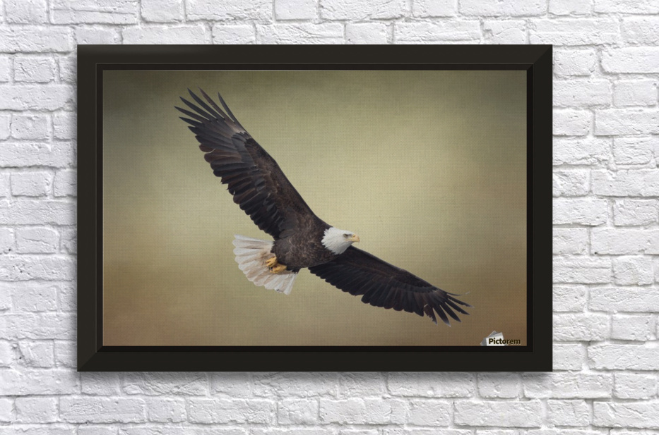 King of the Skies Stretched Frame Print