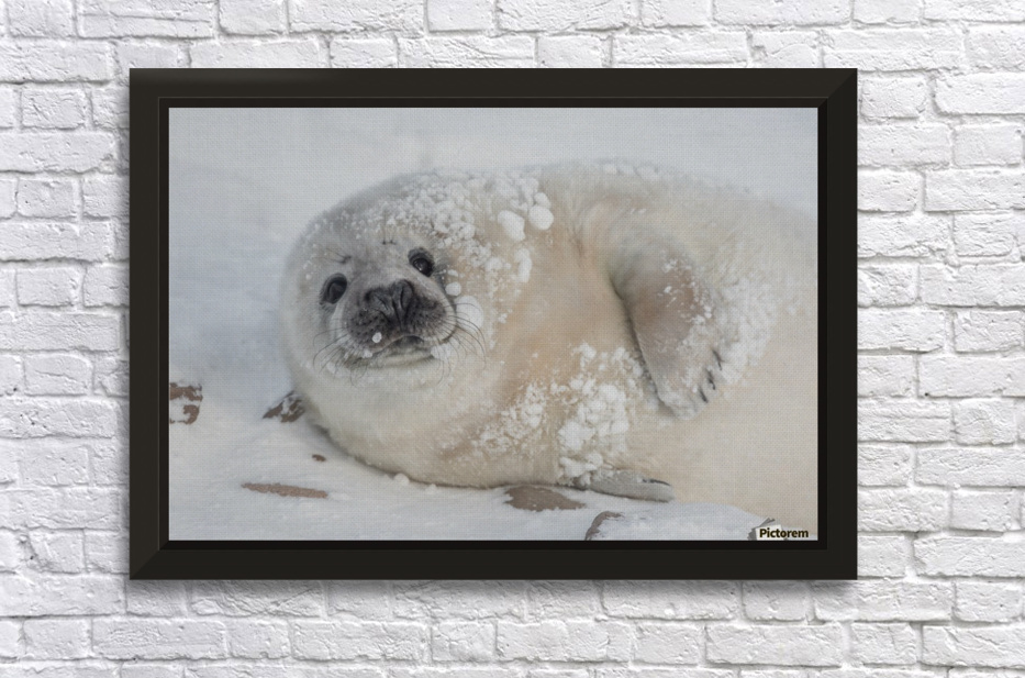 You can call me Snowball! Stretched Frame Print