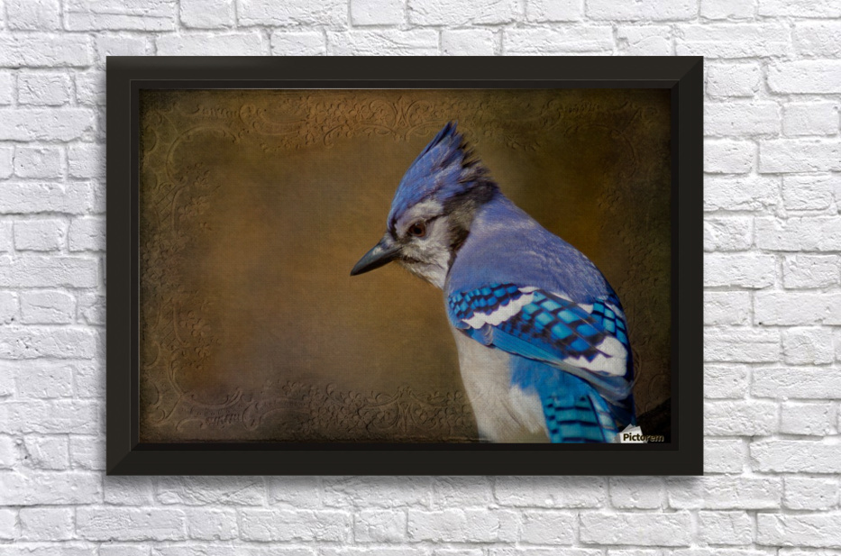 Blue Jay with texture Stretched Frame Print