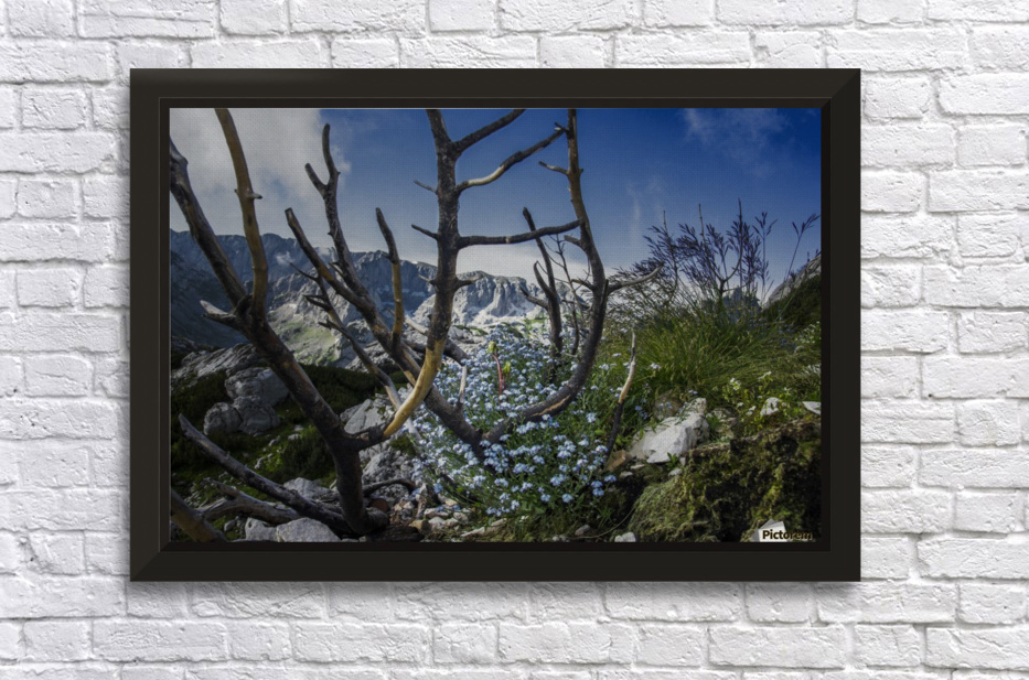Flower of ashes  Stretched Frame Print