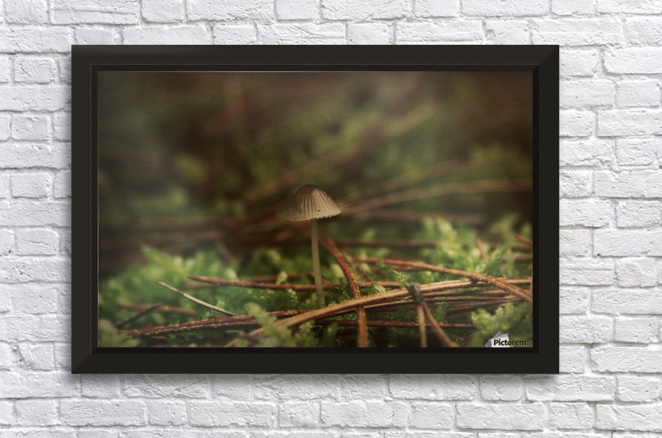 Forest life Stretched Frame Print