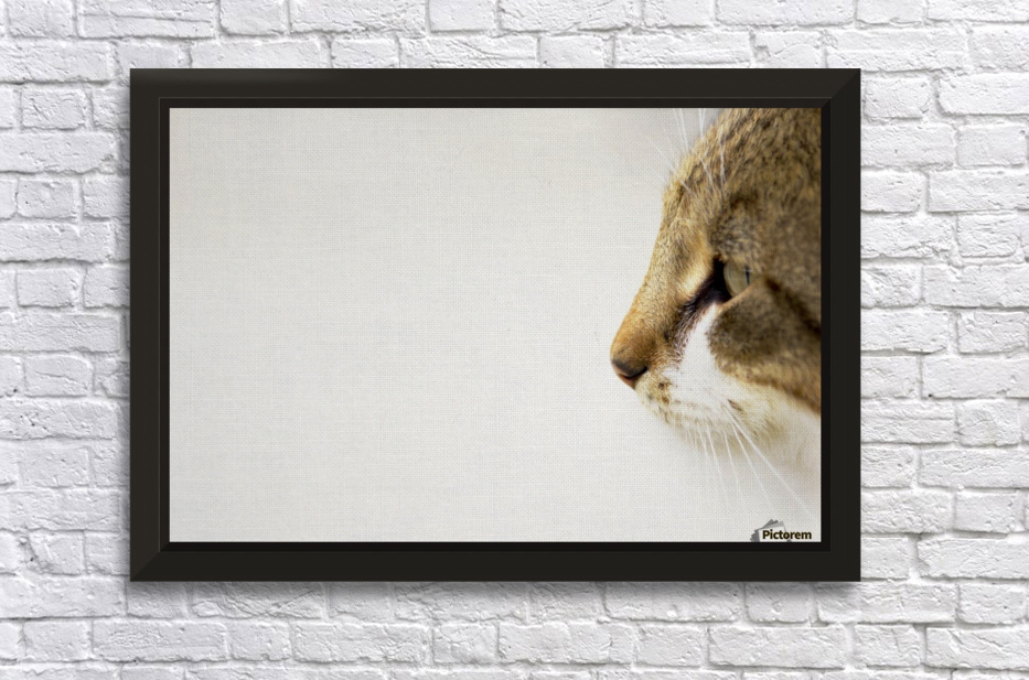 Eyes of prey Stretched Frame Print