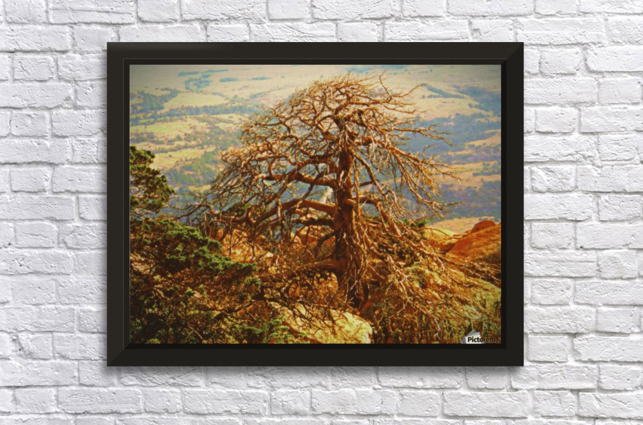 mtscotttreeone Stretched Frame Print