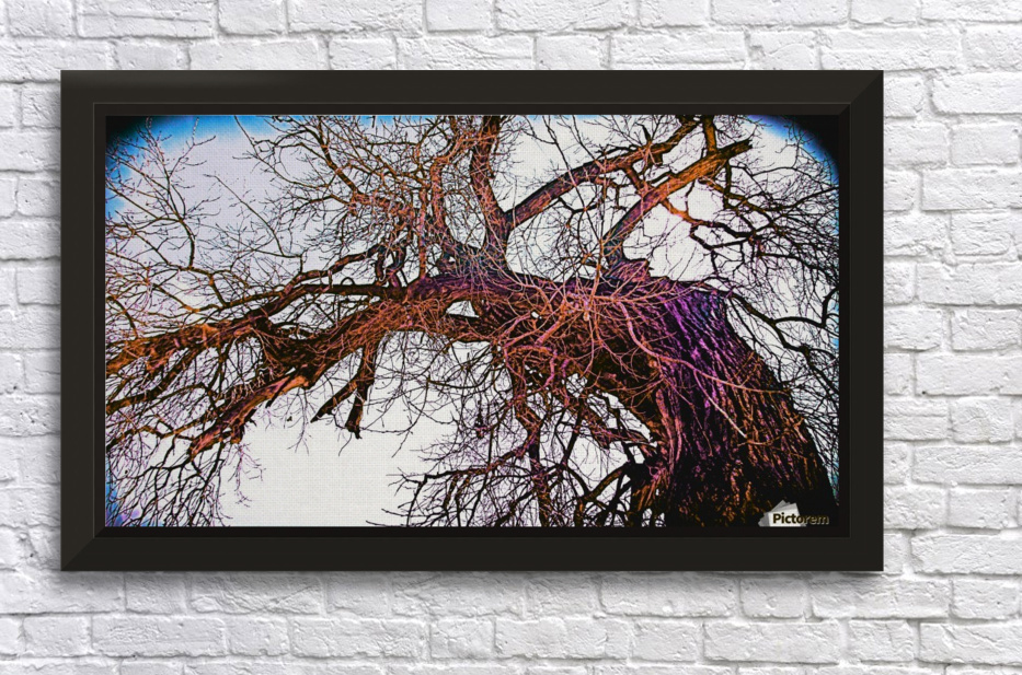 100yearOLDtree Stretched Frame Print