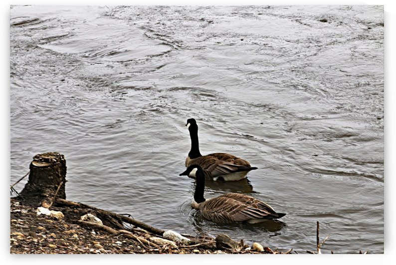 Swimming thru life Together by Don  Baker