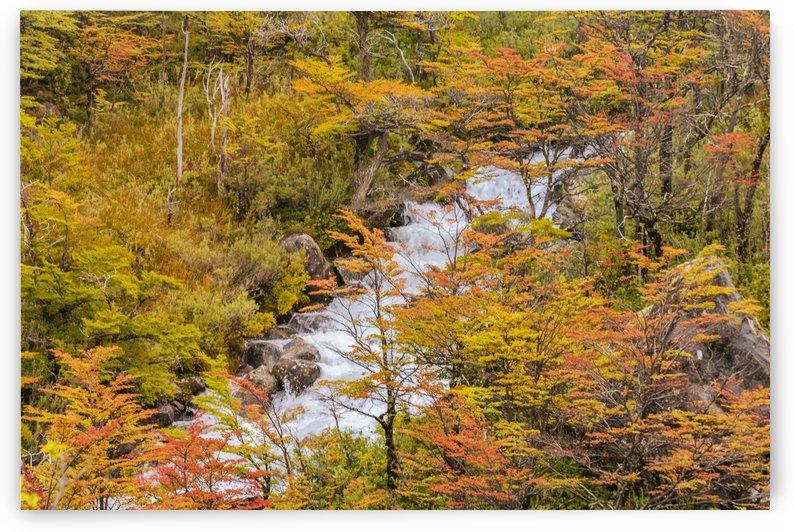 Colored Forest Landscape Scene, Patagonia   Argentina by Daniel Ferreia Leites Ciccarino