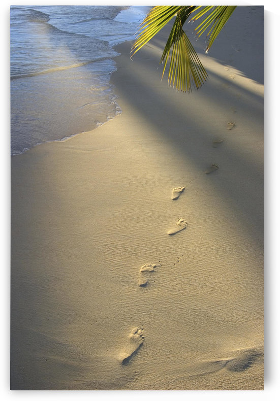 Footprints In Sand At Water's Edge, Soft Warm Golden Light by PacificStock