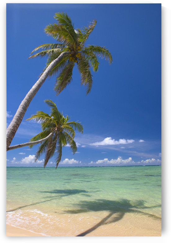 Palm Trees Lean And Cast Shadow On Beach, Turquoise Ocean, Dramatic Sky by PacificStock