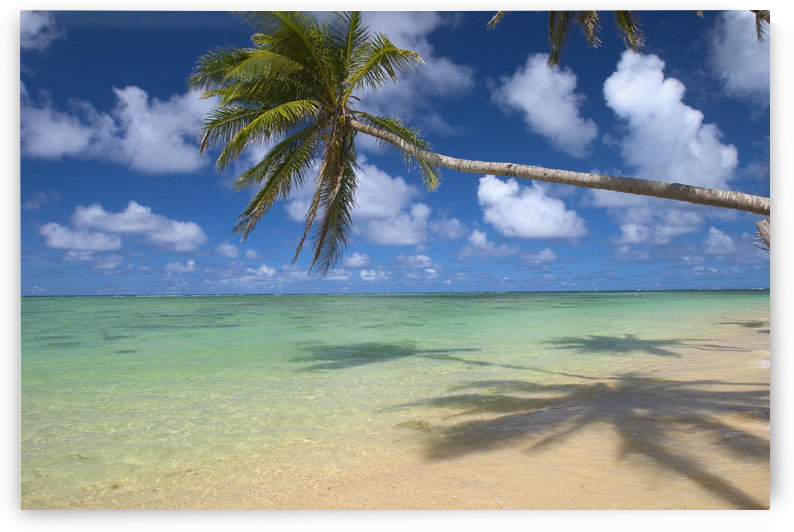 Lone Palm Tree Leaning Over Beach With Shadow, Dramatic Sky, Turquoise Ocean by PacificStock