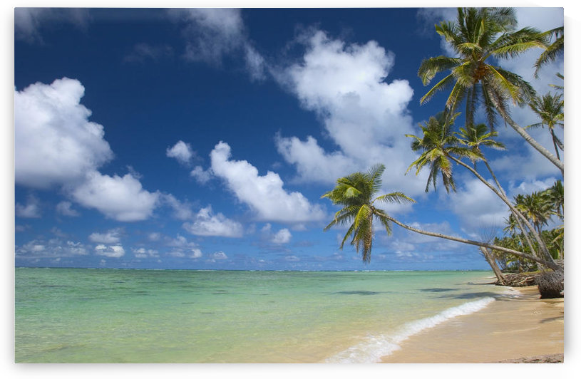 Hawaii, Palm Tree Leaning Over Beach, Polarized Sky, Turquoise Ocean. by PacificStock