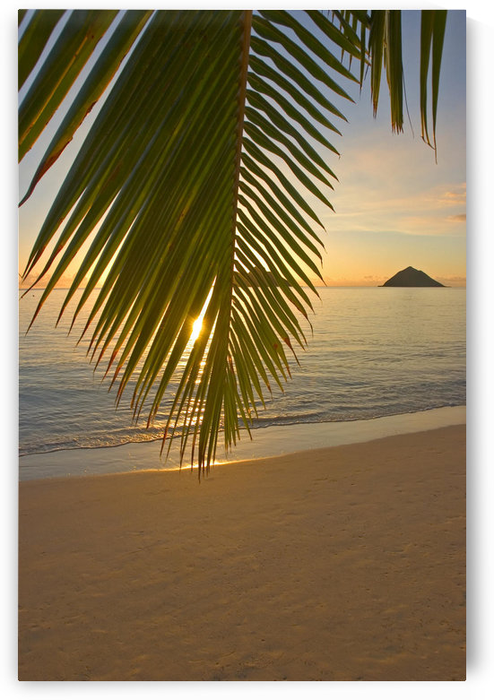 Hawaii, Oahu, Mokulua Islands, Golden Sunrise At Lanikai Beach, Palm Branch by PacificStock