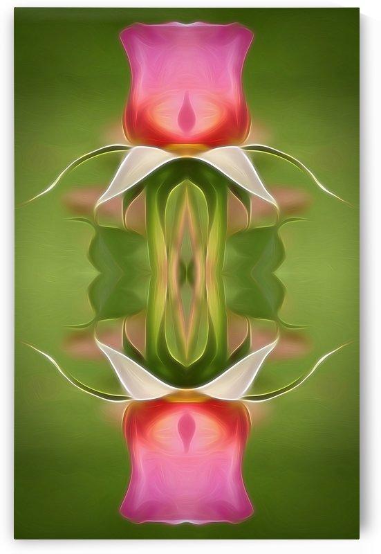 Pink Rose 4 by Debbie Scott