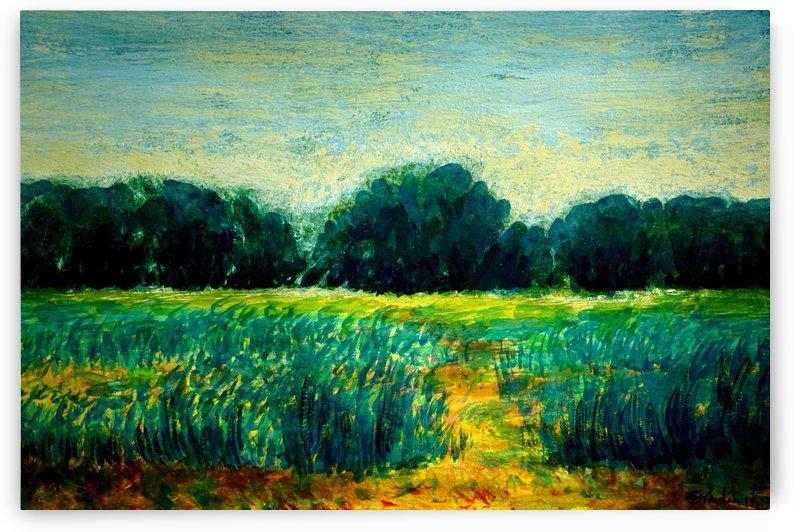 Fields by Pracha Yindee