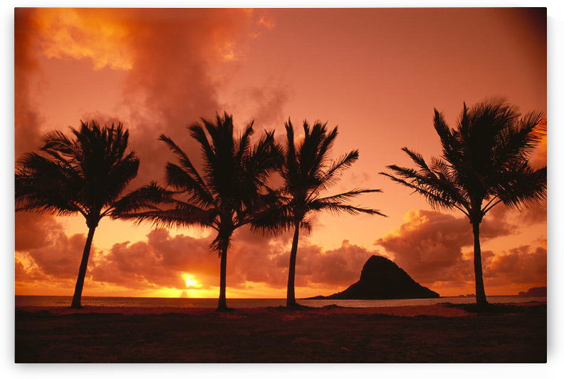 Hawaii, Oahu, Orange Yellow Sunrise At Chinaman's Hat, Palms Silhouetted A42G by PacificStock
