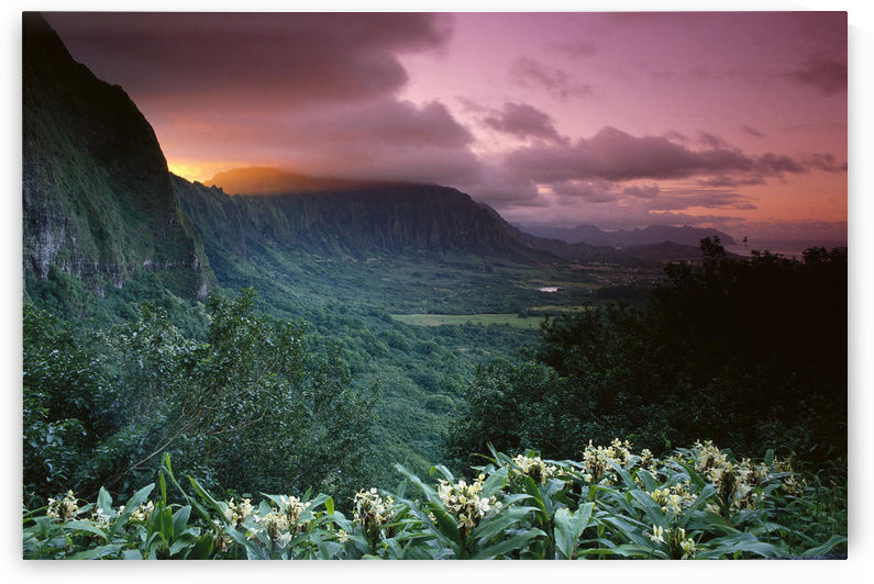 Hawaii, Oahu, Nuuanu Pali State Park, Ko'olau Mountains, Ginger Foreground Twilight A43G by PacificStock