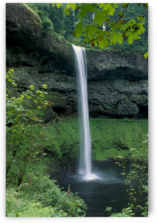Oregon, Silver Falls National Park, South Falls, B1653 by PacificStock