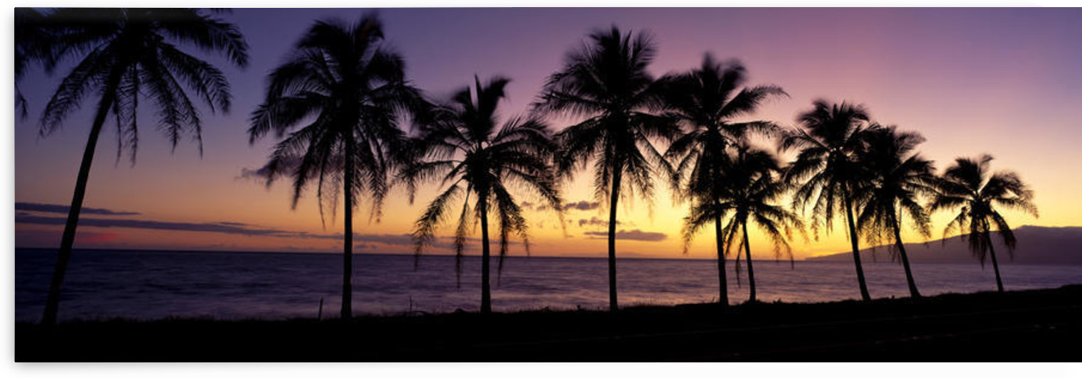 Hawaii, Maui, Dramatic Sunset Silhouette Palm Trees Lined Along Beach, Panoramic B1538 by PacificStock