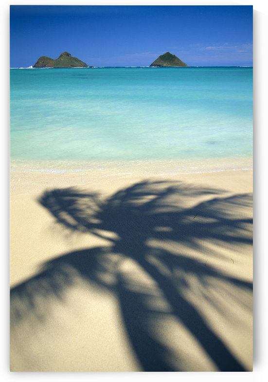 Hawaii, Oahu, Lanikai Beach, Turquoise Ocean, Mokulua Islands, Shadow Of Palm B1489 by PacificStock