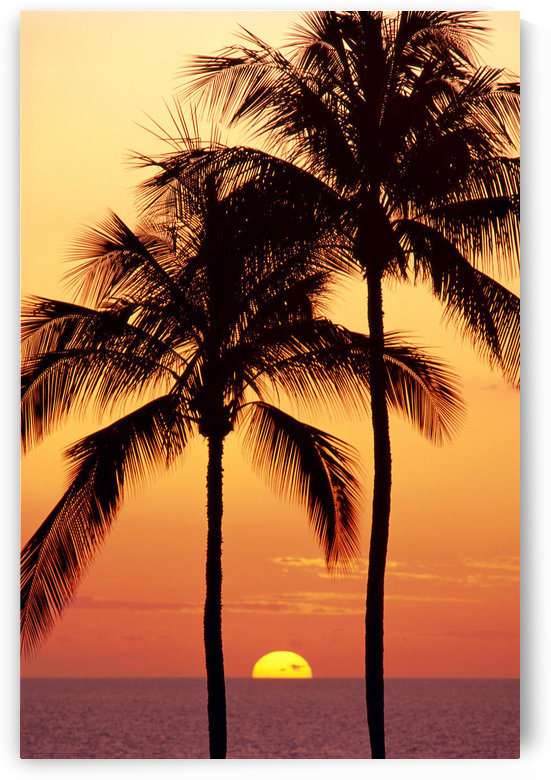 Hawaii, Big Island, Sunset With Coconut Trees Kohala Coast, B1557 by PacificStock