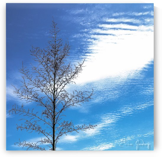 Tree, Sky & Clouds by Enio Godoy