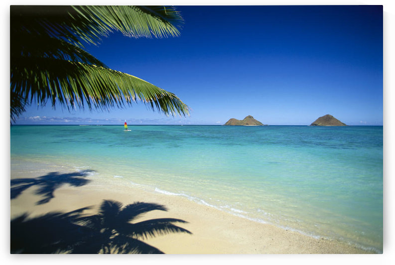 Hawaii, Oahu, Lanikai Beach, Hobie Cat Sailing Near Mokulua Islands, Palms C1554 by PacificStock