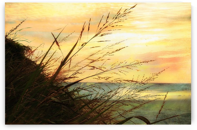 A Musical Sunrise  by Susan Werby